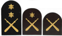 Picture of Physical Training (Gold Badges)