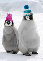 Picture of (Christmas Cards x 10) Penguins
